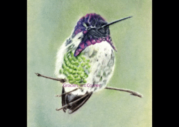 Color Pencil Hummingbird Drawing
