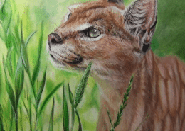 Colored Pencil Caracal drawing tutorial w Powder Blender - Lachri