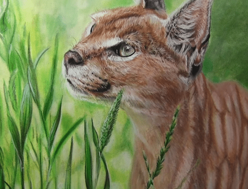Colored Pencil Caracal drawing tutorial w/ Powder Blender