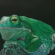 Frog in colored pencil with powder blender
