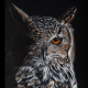 How to draw a realistic owl in colored pencil - Lachri