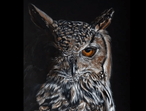 How To Draw A Realistic Owl In Colored Pencil Lachri Brush And Pencil