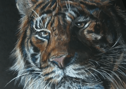How to get white lines and details in colored pencil - real time drawing w Lachri