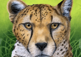 "TUTORIAL: ""Relaxed Afternoon"" Cheetah drawing in coloured pencil with powder blender"